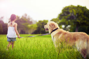 What You Can To Do Support Joint Health & Ease Arthritis In Your Pet