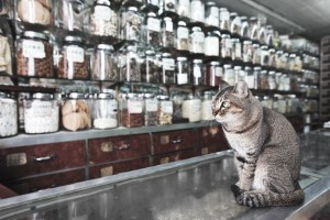 Herbology and Common Herbs to Use with Pets