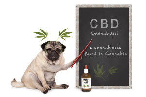 CBD Oil  & Your Pet's Health
