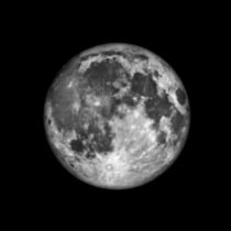 True or False: Debunking Myths about the Full Moon's Effect on Pets