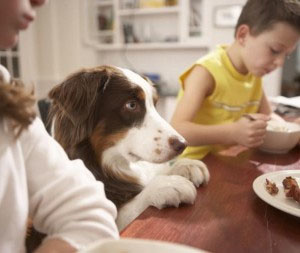 What Is A Basic Pet Nutrition Consult