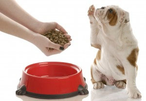 Kibble Comparison Part 2: Nutrition Info & Pricing for Grocery Store Kibbles