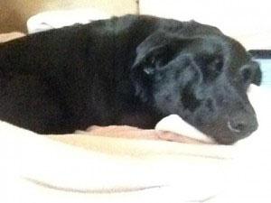 Case Study: Rescue Dog Midnight