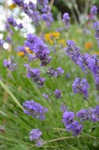 Rachel's Naturopathic Herb Walk