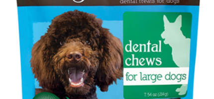 Taking Care of Your Pet's Dental Health Leads to a Healthier, Longer Life For Them
