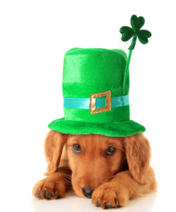 Happy St. Patrick's Day,! Come and Save Some Green with Us!