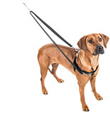 "2 hounds Design 2 Hounds Design Freedom No-Pull Harness 1""  Extra Large (XL) Purple"