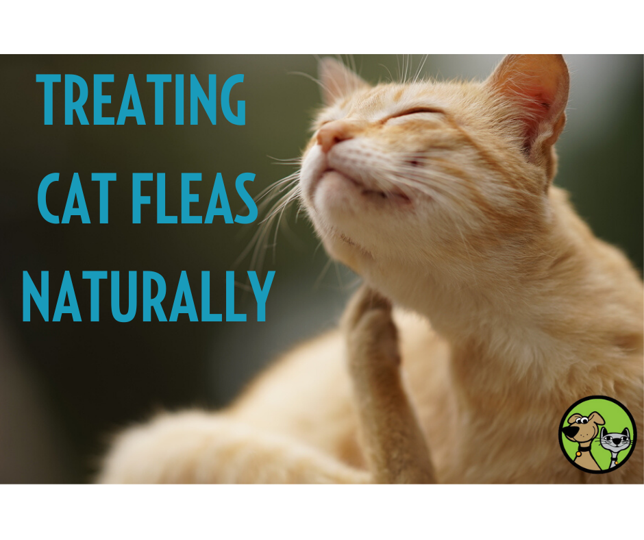 How Do I Protect My Cat From Fleas Naturally?