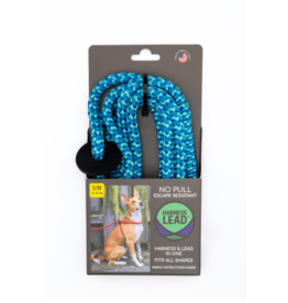 Harness Lead Harness Lead | Blue Small 14-40 lbs