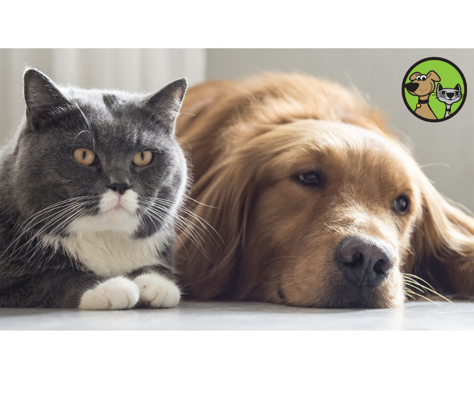 Common Pain In Cats And Dogs