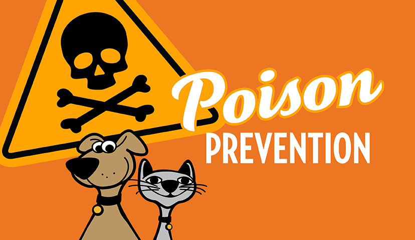 Poison Prevention Tips For Your Cat & Dog
