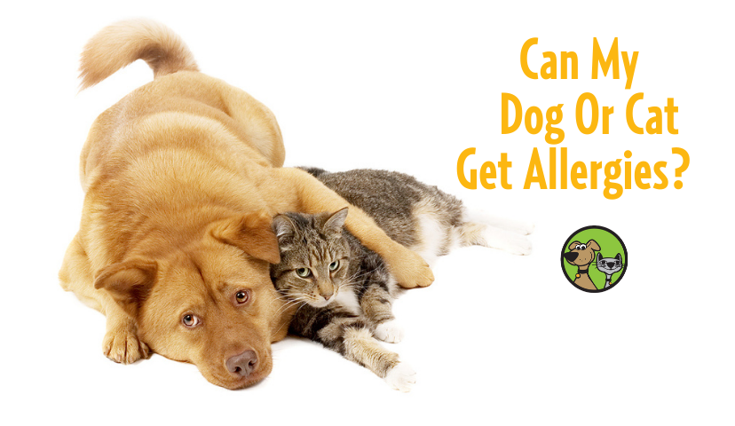 Can My Dog Or Cat Get Allergies?