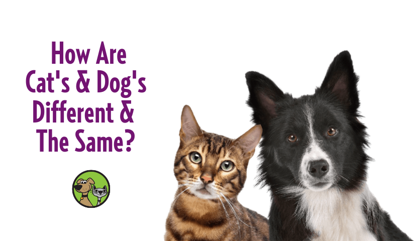 How Are Cats & Dogs Different & The Same?