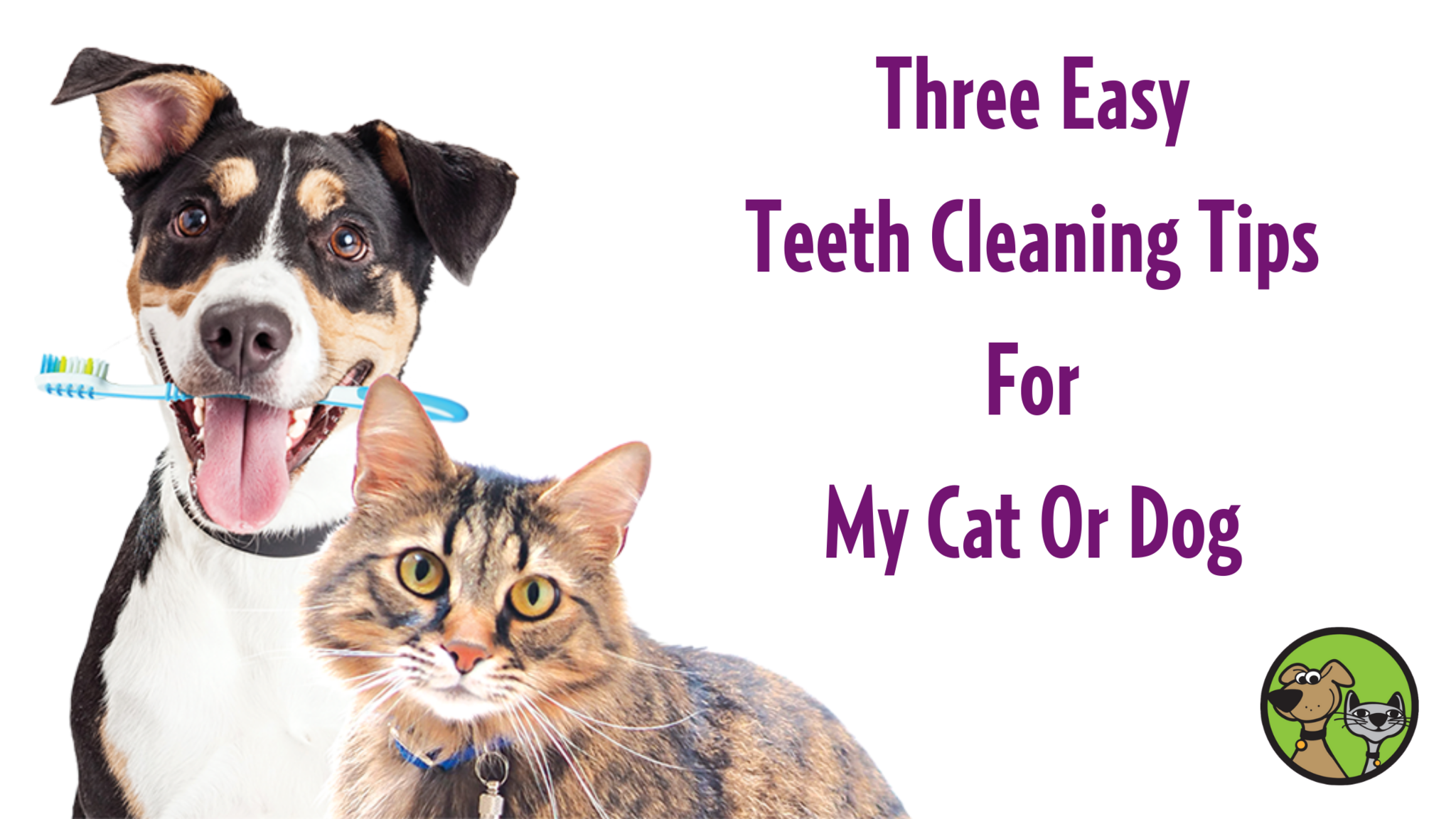 Three Easy Teeth Cleaning Tips For My Cat Or Dog