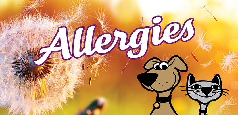Asthma & Seasonal Allergies in Cats & Dogs
