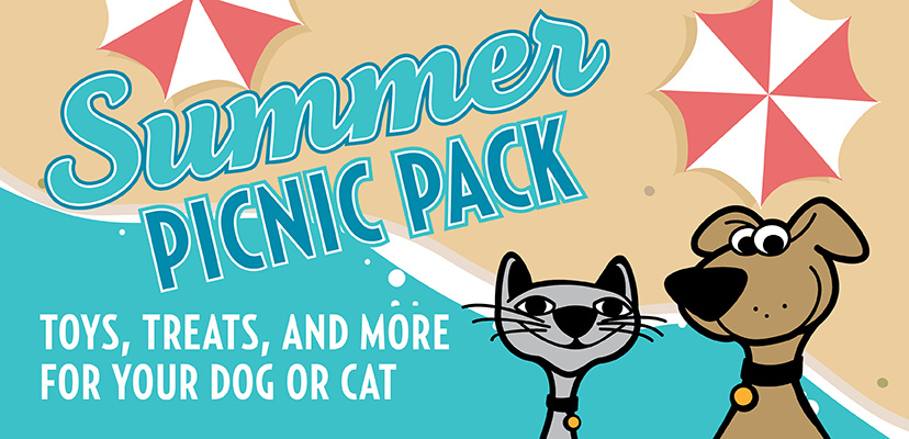 The Best Summer Essentials For Cats & Dogs