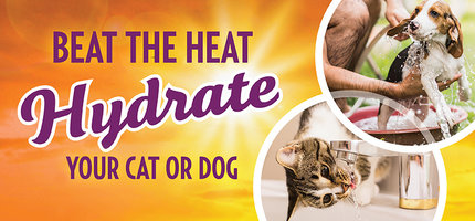 Can Dogs Or Cats Get Dehydrated?