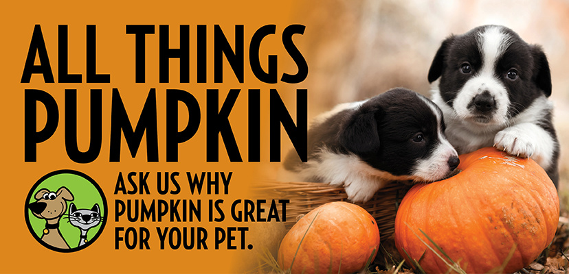 The Benefits Of Adding Pumpkin To Your Pet's Diet