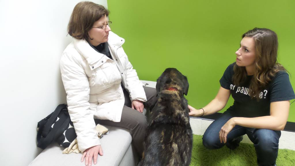 Understanding TMJ Disorder in Our Pets