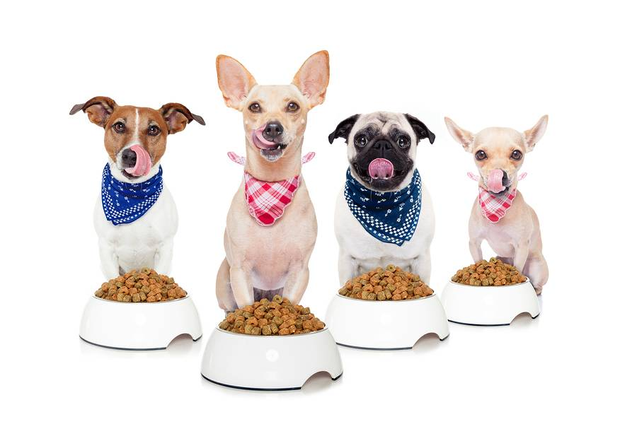 Rotating Your Dog's Food