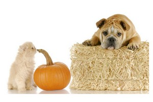 Pick a Pumpkin for Your Pet this Halloween!