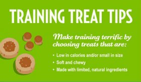 January is National Dog Training Month