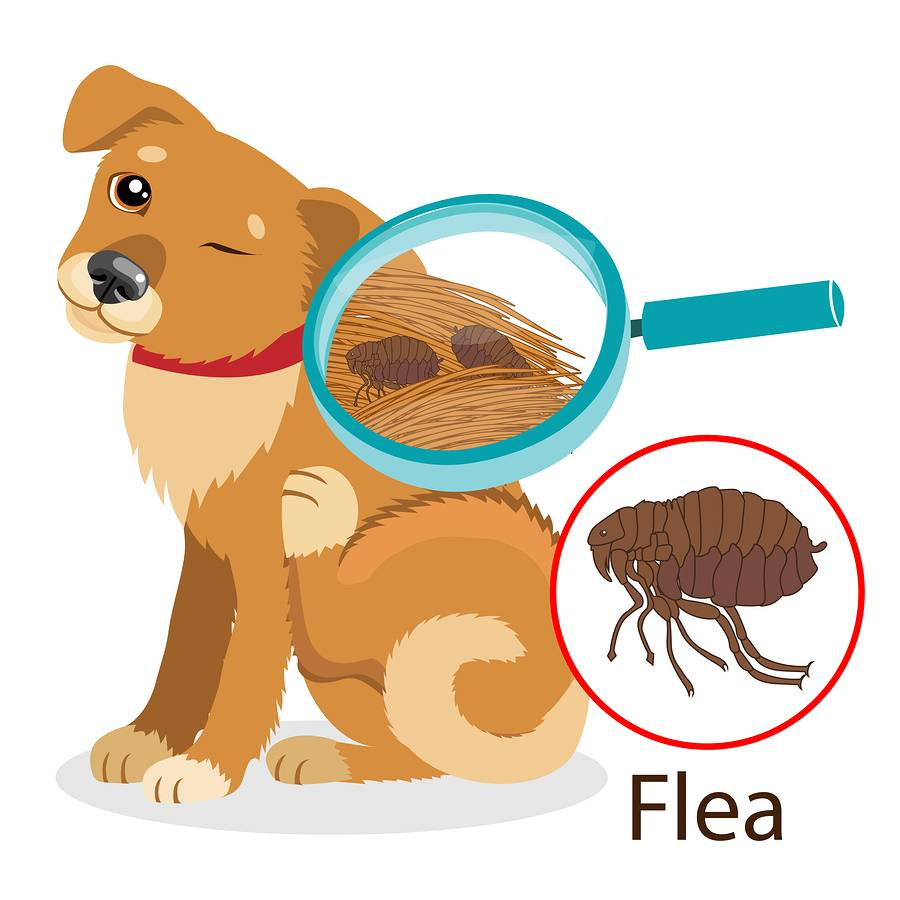 Fleas, Flies and Ticks, Oh My!