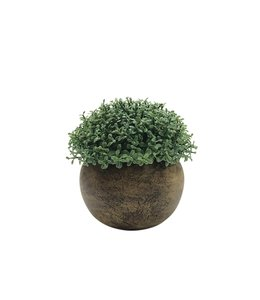 "LAUREN TAYLOR TREE BUSH IN BAMBOO LOOK POT (MP12) 3.75X4"""