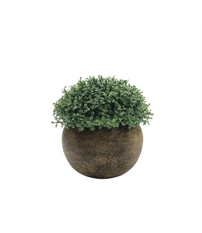 LAUREN TAYLOR TREE BUSH IN BAMBOO LOOK POT (MP12) 3.75X4""