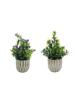 "LAUREN TAYLOR ARTIFICIAL FLOWERS IN CEMENT POT (MP24) 3.5X9"""