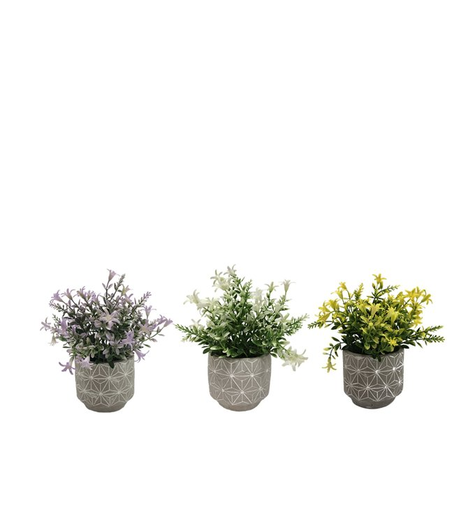 LAUREN TAYLOR ARTIFICIAL FLOWERS IN CEMENT POT (MP12) 4X8""