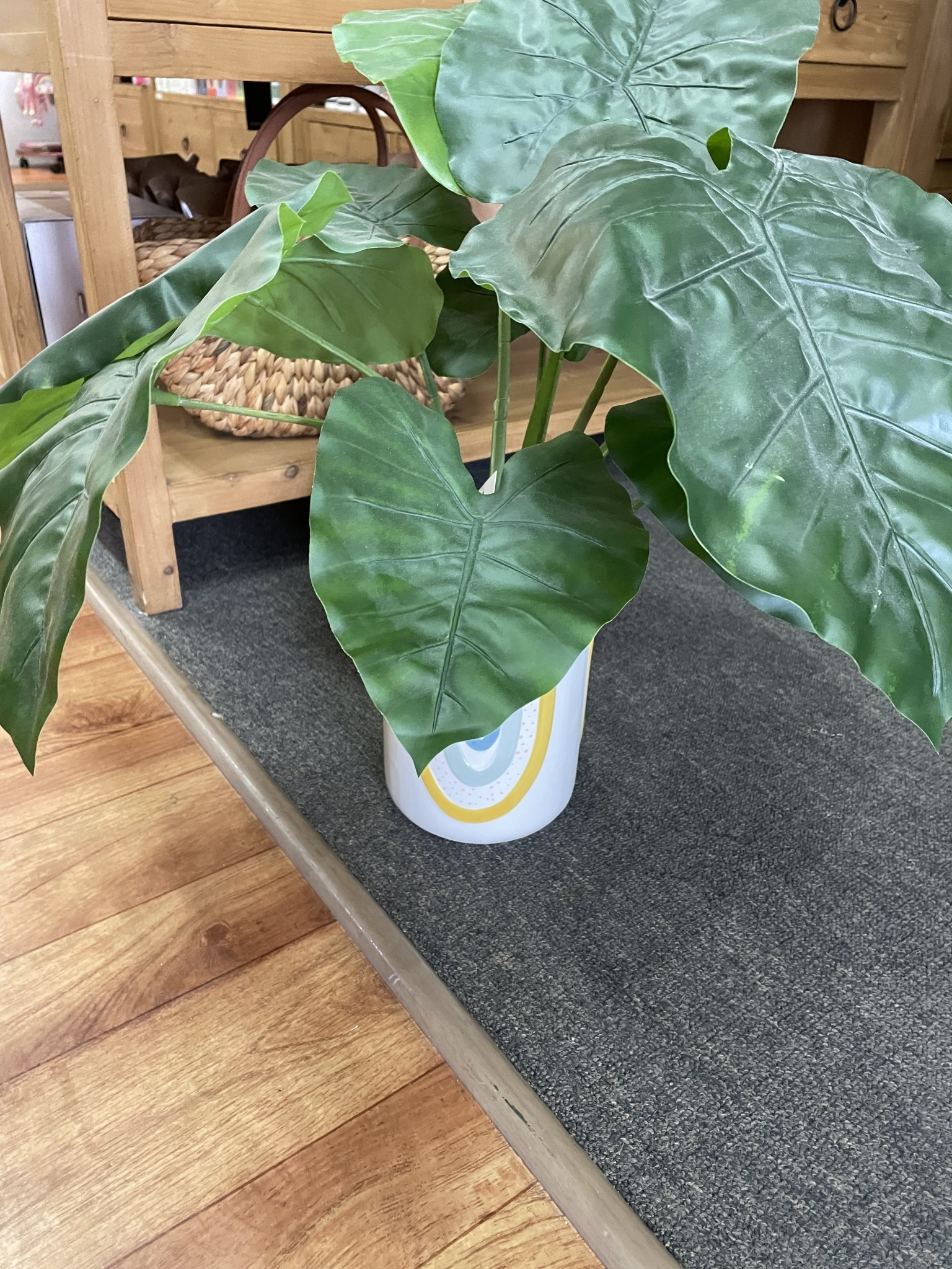 Rainbow Pot and Plant