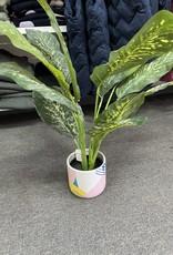 Colourful Pot & Plant