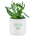 About Face Designs Seedy MF Planter