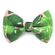 Winthrope Clothing Co Dog Bow Tie Monstera Large