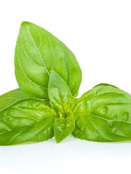 Basil, Sweet Essential Oil