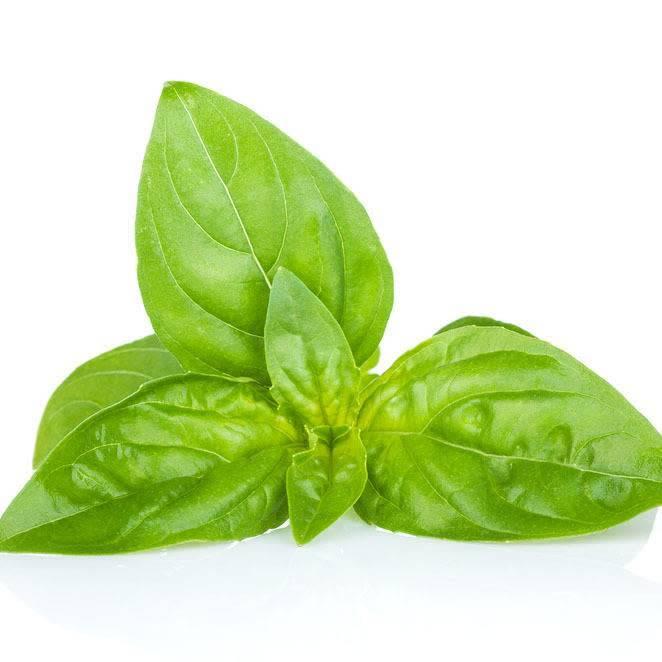 Basil, Sweet Ess Oil