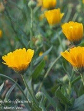 Calendula Flower Whole Bulk