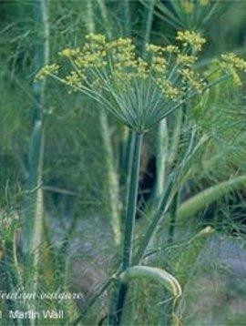 Fennel Seed Whole Bulk