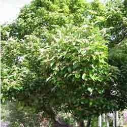 Hawthorn Berry Whole Bulk