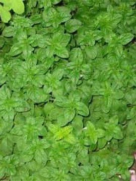 Peppermint Leaf Powder Bulk