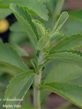 Stevia Leaf Cut and Sifted Bulk