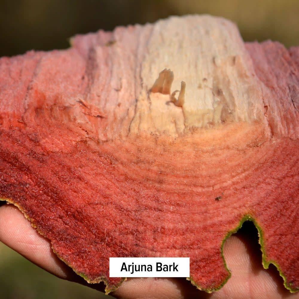 Arjuna Bark Powder Bulk