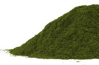 Wheat Grass Shoots Powder Bulk