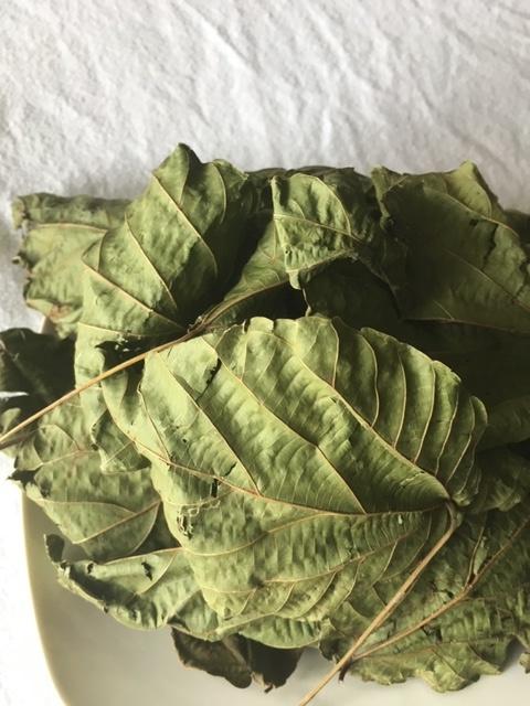 Alchornea leaf tincture