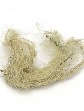 Usnea-lichen Whole Bulk