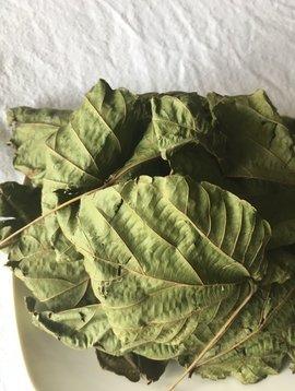 Alchornea Cordifolia Cut and Sifted Bulk