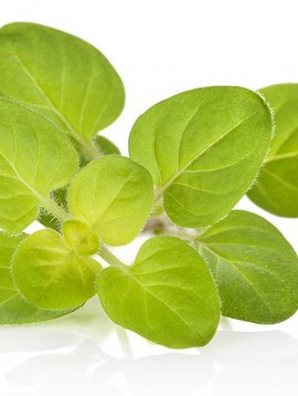Marjoram, Sweet Essential Oil 1/4 oz.