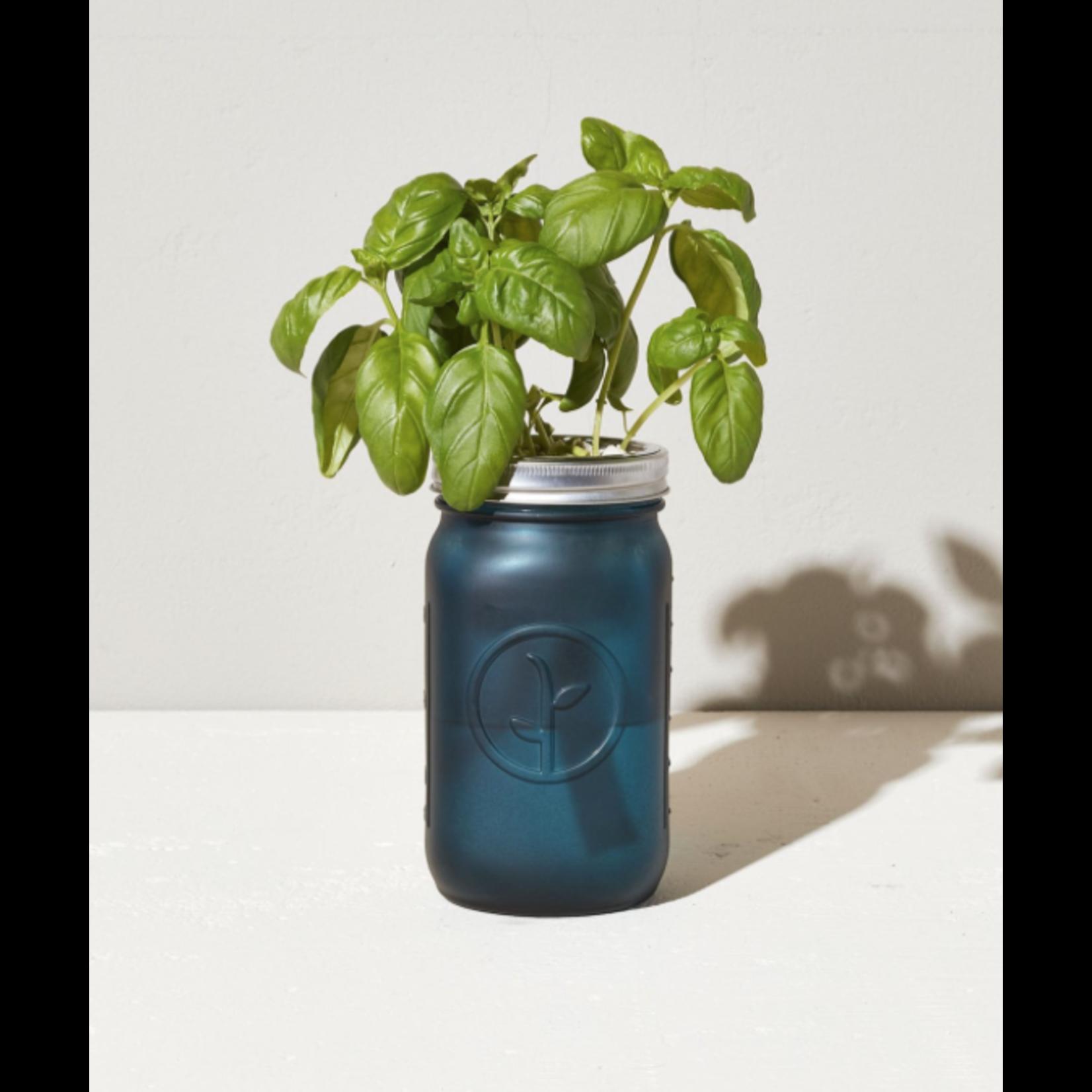 Modern Sprout Bocal de jardin - Basilic organique