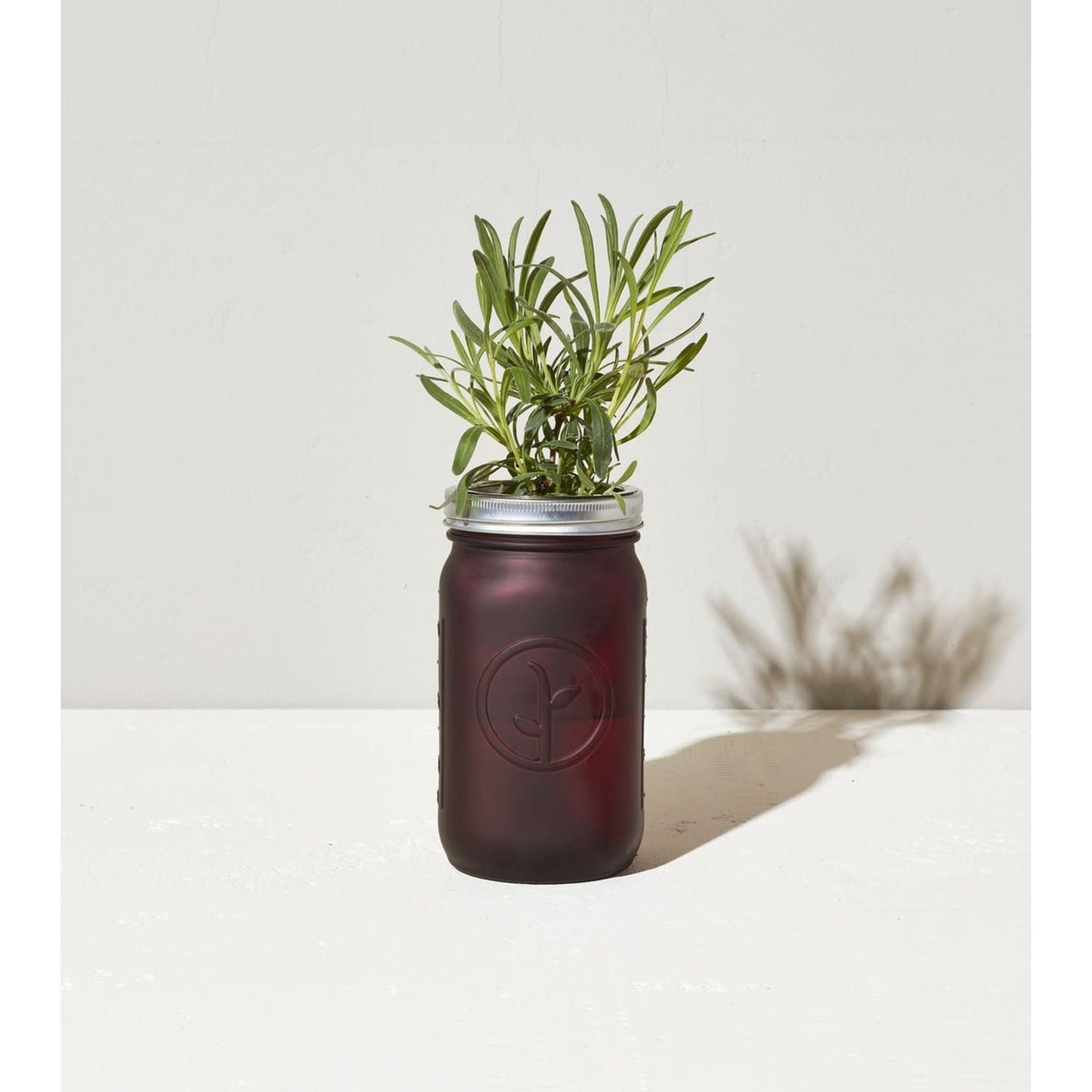 Modern Sprout Bocal de jardin - Sauge